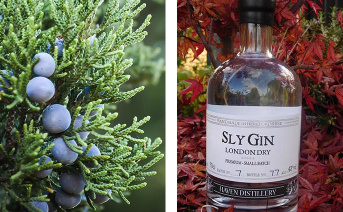 Sly Gin is created by hand in incredibly small batches using herbs from our Herefordshire garden